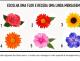 Teste: Escolha uma flor e receba uma mensagem de encorajamento